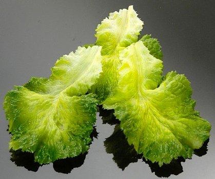 Artificial leaf lettuce