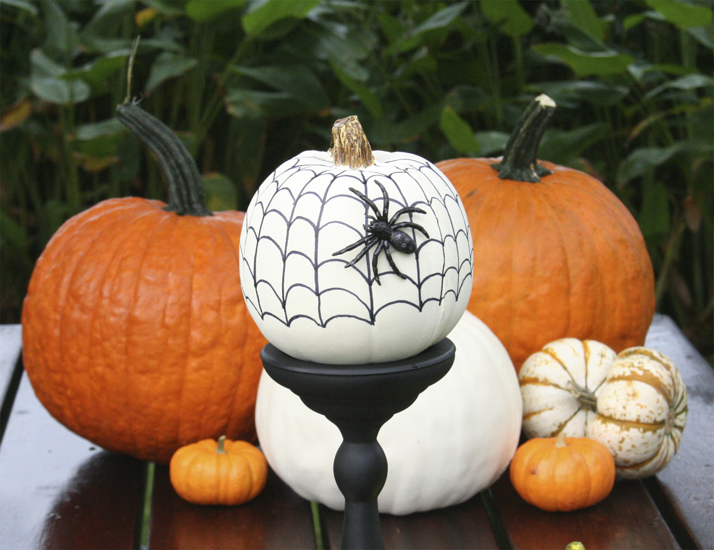 Look out! The spider has woven his web on this mini pumpkin