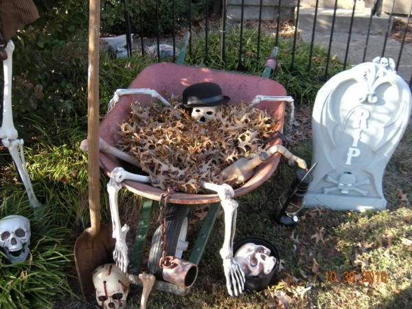 skeleton in the wheelbarrow after dying from digging too many graves makes great halloween yard decoration