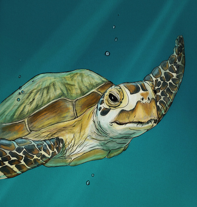 Sea Turtle stretched canvas