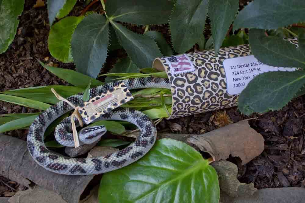 Creative Jungle themed Party Invitation