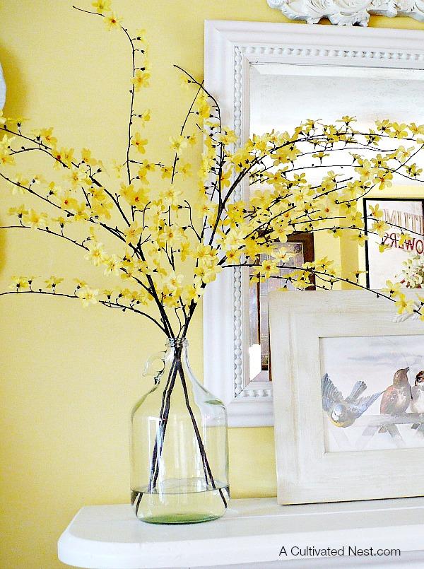 Forsythia-blooms