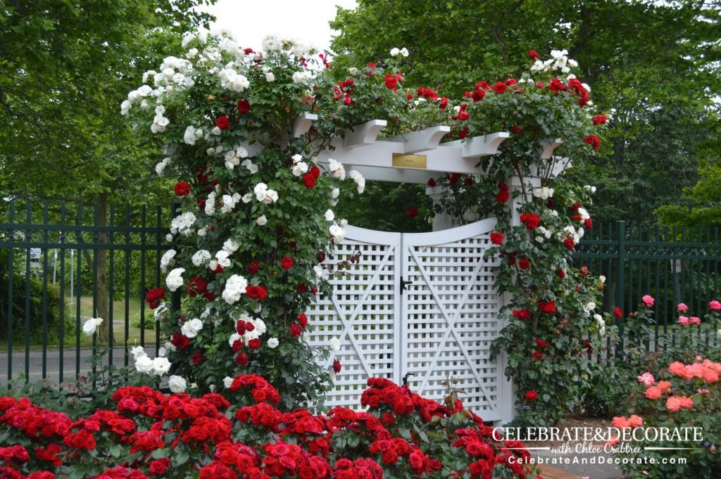 Southampton-Rose-Garden