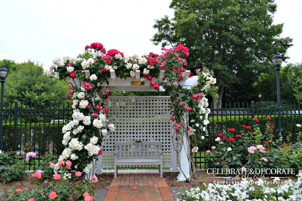 Southampton-Rose-Garden2