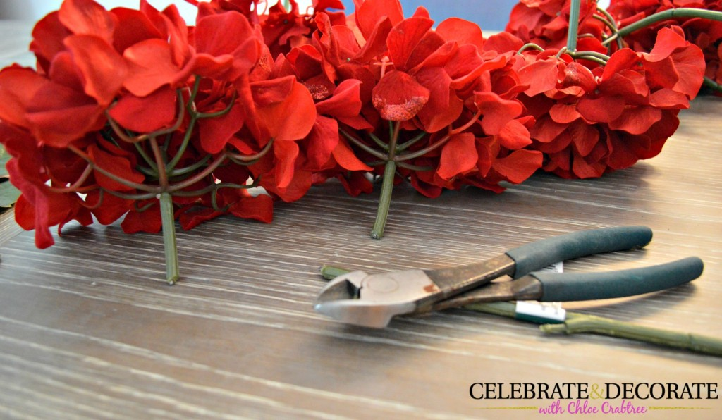 Red hydrangea blossoms