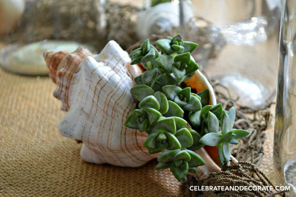 Summer Beach Tablescape with tiny succulents in seashells.