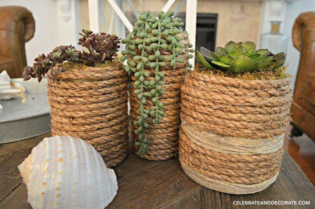 Coastal succulent containers.