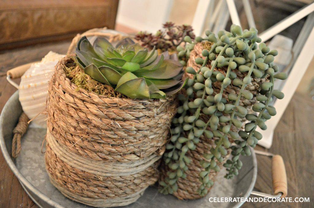 DIY Succulent vases