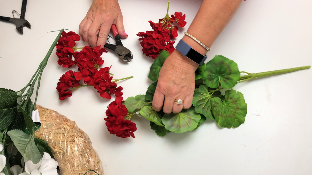 Cutting the blooms off a red silk geranium plant