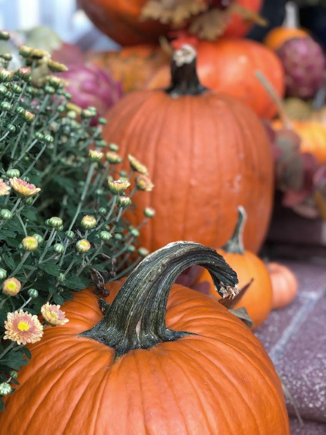 Close up of pumpkins and mums on display for fall